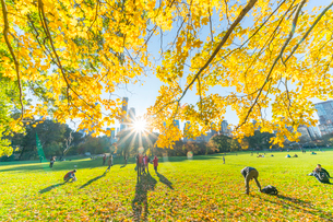 ミッドタウンマンハッタン摩天楼の間に輝く太陽に照らされるセントラルパーク シープメドウの紅葉と落ち葉の写真素材 [FYI02999039]