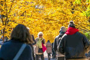紅葉の並木に囲まれたセントラルパーク沿いの五番街の歩道を歩く人々。の写真素材 [FYI02999040]