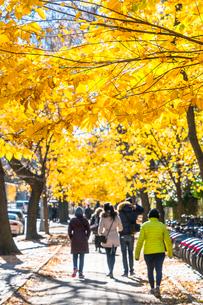 紅葉の並木に囲まれたセントラルパーク沿いの五番街の歩道を歩く人々。の写真素材 [FYI02999048]