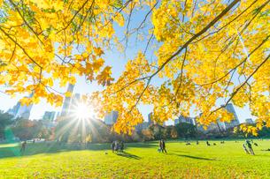 ミッドタウンマンハッタン摩天楼の間に輝く太陽に照らされるセントラルパーク シープメドウの紅葉と落ち葉の写真素材 [FYI02999049]