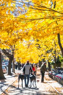 紅葉の並木に囲まれたセントラルパーク沿いの五番街の歩道を歩く人々。の写真素材 [FYI02999050]