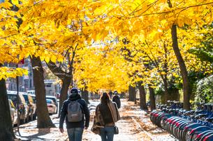 紅葉の並木に囲まれたセントラルパーク沿いの五番街の歩道を歩くカップル。の写真素材 [FYI02999052]