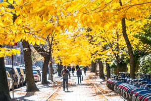 紅葉の並木に囲まれたセントラルパーク沿いの五番街の歩道を歩く人々。の写真素材 [FYI02999053]