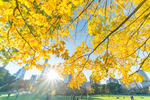 ミッドタウンマンハッタン摩天楼の間に輝く太陽に照らされるセントラルパーク シープメドウの紅葉と落ち葉の写真素材 [FYI02999055]