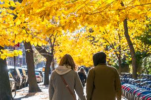 紅葉の並木に囲まれたセントラルパーク沿いの五番街の歩道を歩くカップル。の写真素材 [FYI02999058]