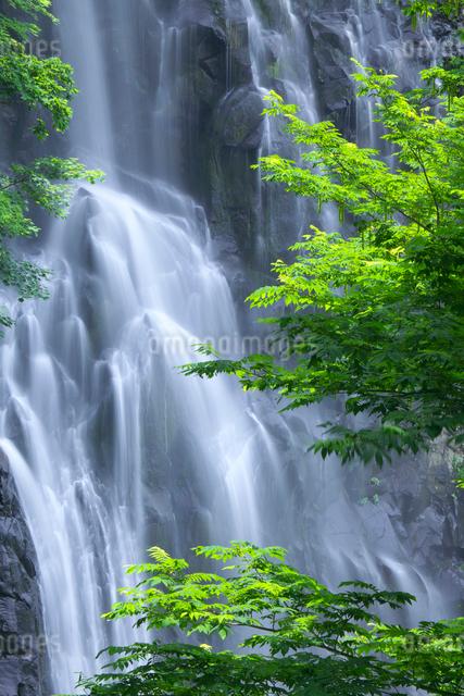 新緑と一ノ滝 立又渓谷の写真素材 [FYI02999588]