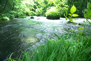若葉と渓流 奥入瀬渓流の写真素材 [FYI02999590]