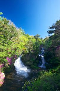 新緑とトウゴクミツバツツジ 竜頭ノ滝の写真素材 [FYI02999622]