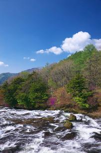 新緑とトウゴクミツバツツジ 竜頭ノ滝の写真素材 [FYI02999630]