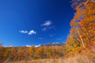 乗鞍高原の紅葉と乗鞍岳の写真素材 [FYI02999703]