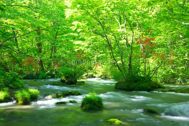 新緑と山ツツジ咲く奥入瀬渓流の写真素材 [FYI03000211]