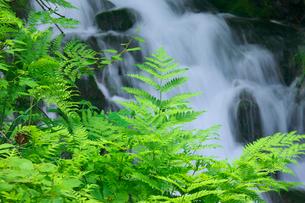 新緑の白金不動滝の写真素材 [FYI03000251]