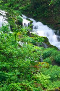 新緑の白金不動滝の写真素材 [FYI03000252]