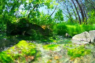 新緑の渓流と水草の写真素材 [FYI03000982]