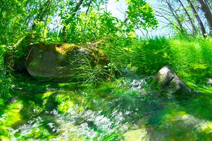 新緑の渓流と水草の写真素材 [FYI03000983]