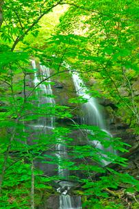 新緑の九段の滝 奥入瀬渓流の写真素材 [FYI03001000]