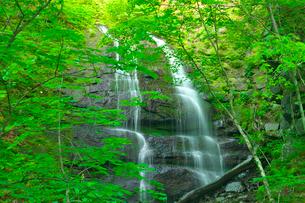 新緑の九段の滝 奥入瀬渓流の写真素材 [FYI03001002]