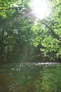 新緑の渓流と木漏れ日の写真素材 [FYI03001137]