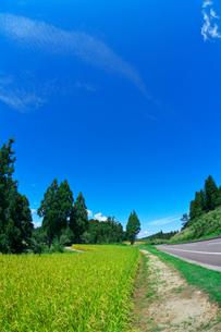実りの田んぼと道路の写真素材 [FYI03001281]