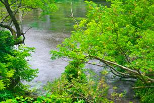 新緑の柿田川の写真素材 [FYI03001496]