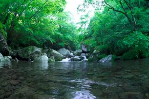 新緑の渓流の写真素材 [FYI03002023]