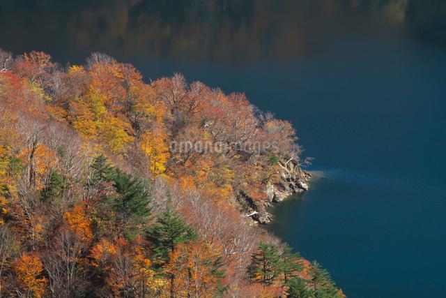 紅葉の田子倉湖の写真素材 [FYI03002139]