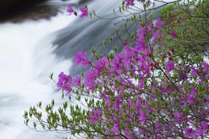 ツツジ咲く竜頭の滝の写真素材 [FYI03002831]