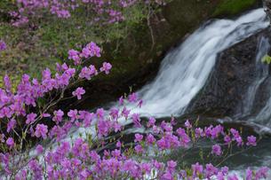 ツツジ咲く竜頭の滝の写真素材 [FYI03002832]