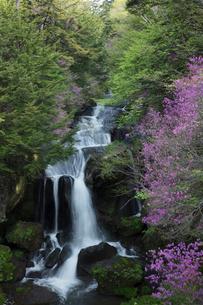 ツツジ咲く竜頭の滝の写真素材 [FYI03002836]