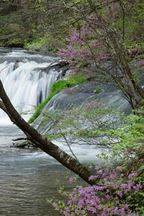 新緑とツツジの渓流の写真素材 [FYI03002843]