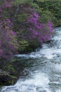 ツツジ咲く竜頭の滝の写真素材 [FYI03002847]