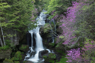 ツツジ咲く竜頭の滝の写真素材 [FYI03002848]