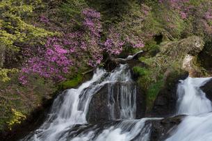ツツジ咲く竜頭の滝の写真素材 [FYI03002850]