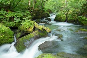 新緑の奥入瀬渓流の写真素材 [FYI03002858]