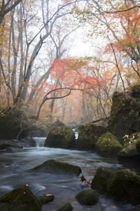 紅葉の奥入瀬渓流の写真素材 [FYI03002977]