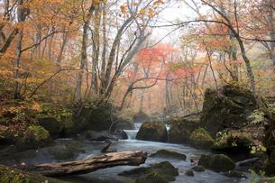 紅葉の奥入瀬渓流の写真素材 [FYI03002979]