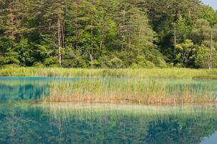新緑の弁天沼の写真素材 [FYI03003274]