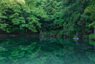 日本名水百選 栃木県天然記念物 出流原弁天池湧水の新緑の朝の写真素材 [FYI03003405]