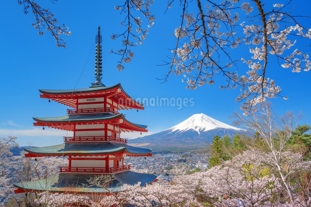 桜咲く忠霊塔の五重の塔と富士山の写真素材 [FYI03003514]