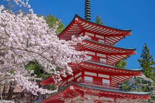 桜咲く忠霊塔の五重の塔の写真素材 [FYI03003521]