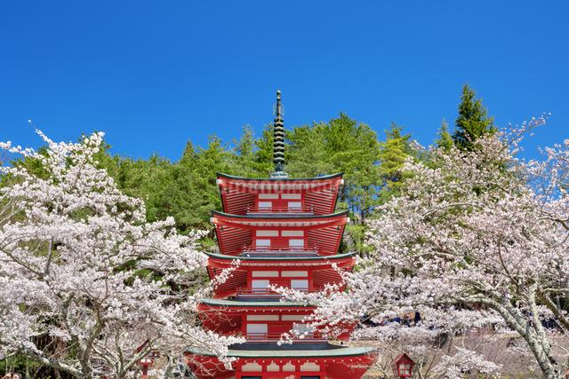 桜咲く忠霊塔の五重の塔の写真素材 [FYI03003526]