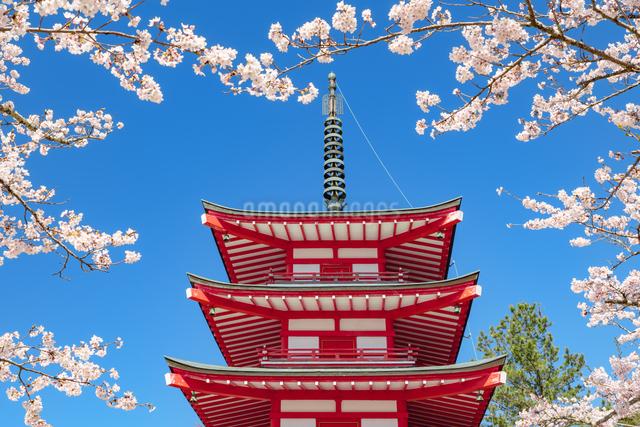 忠霊塔の五重の塔と桜の写真素材 [FYI03003551]
