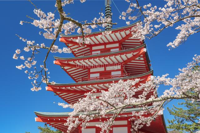 忠霊塔の五重の塔と桜の写真素材 [FYI03003552]