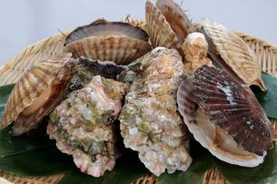 牡蠣とホタテ貝の写真素材 [FYI03003943]