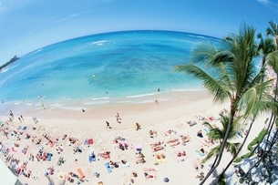 オアフ島の海水浴場とヤシの木 ハワイの写真素材 [FYI03004313]
