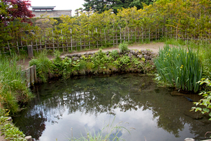 忍野八海の銚子池の写真素材 [FYI03004716]
