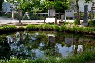 忍野八海の湧池の写真素材 [FYI03004717]