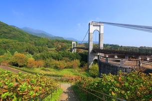 秋の風の吊り橋の写真素材 [FYI03005398]