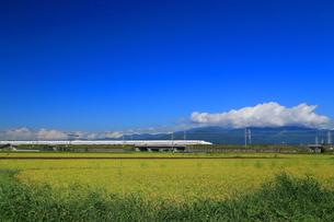 秋の田園を走る新幹線の写真素材 [FYI03005405]