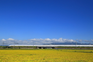 秋の田園を走る新幹線の写真素材 [FYI03005409]